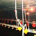 Equipos de levantamiento de pollos con control ambiental