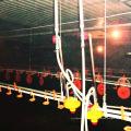 Casa de construção em aço pré-fabricada para criação de galinhas