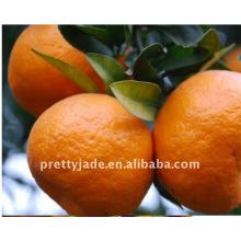 Süßes Baby Mandarin