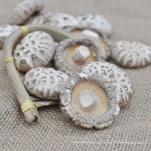 Cogumelo shiitake seco