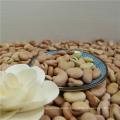 Preis für Favabohnen 60-70 Saubohnen zu verkaufen