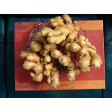 premium ginger