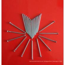 Clavo de alambre común de hierro galvanizado en el mejor precio