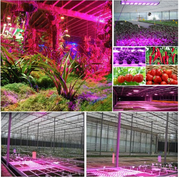 LED Plant Grow Light 65W