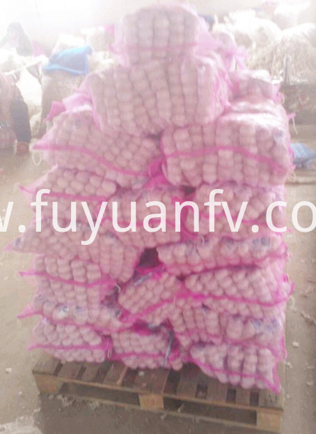 garlic in mesh bag export to Panama