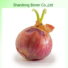 2015 China New Crop Fresh Red Onion