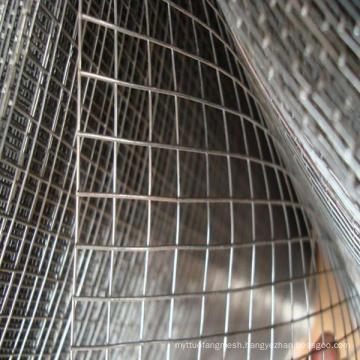 Galvanized Welded Wire Mesh in Rolls