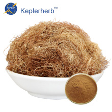 Corn Silk Extract Powder