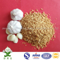 Best Quality Fried Garlic Granules From China