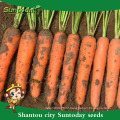 High times vegetable for sale heirloom hs code seed carrot cultivation of agricultural seed sowing sower plantting (51004)
