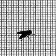 Metall Moskitonetz, Fenstergitter, Insektenschutzgitter, Stahlgitter, Eisennetz