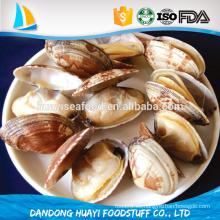 Alta calidad congelados Clam Baby Clam Necked clam proveedores y exportadores en China