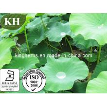 Nuciferine 2% par HPLC, 10: 1 extrait de feuille de lotus