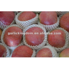 new crop unbagged Qinguan Apple