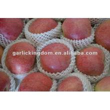 Новый урожай без ящиков Qinguan Apple
