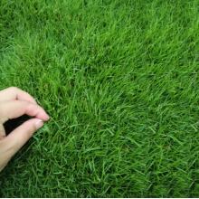 Best bermuda grass seed to plant