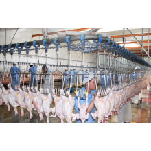 Broiler Slaughtering Line From China