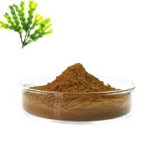 Best price high quality chinese supply fucus vesiculosus extract powder fucoxanthin powder