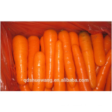 CHINESE CARROTS