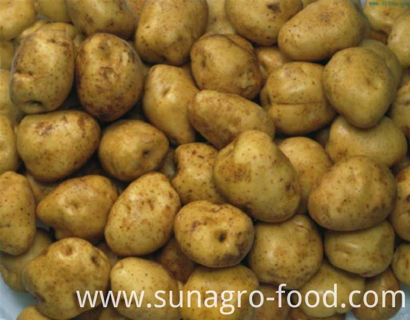 Quality Large Fresh Potatoes