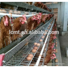 Layer Chicken House Design de China Proveedor profesional