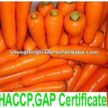 carotte fraîche chinoise