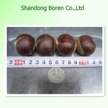100% Natur Frische Kastanie aus China