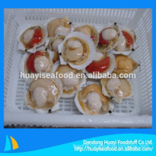 Frozen raw scallop export levels