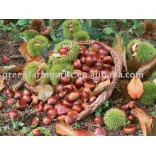 Greenfarm Fresh Chestnut