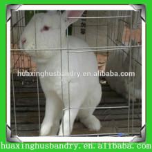 Fazenda de coelho à venda