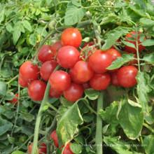 Liquid Amino Acid of Organic Fertilizer