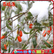Dried wolfberries goji seeds for sale goji berries for weight loss