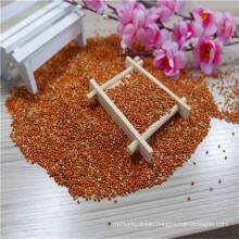 Chinese red millet for feeding, bird seeds