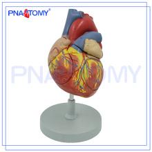 ПНТ-0405 2 раза увеличены 4 части биологической медицинской преподавания сердце 3D модель