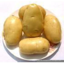 Venta caliente, grande, patata de China