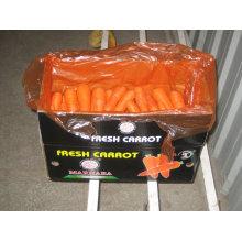 Chinês, preminum, cenoura