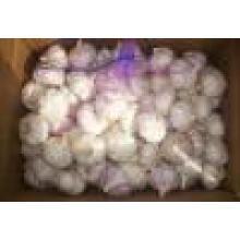 2016 Fresh White White Garlic Market Price