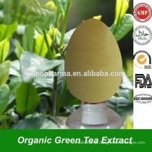 Premium Instant Green Tea Extract Powder EGCG Catechin Polyphenol em Steviosides a granel para extrato de chá verde antioxidante