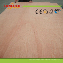 Quality 18mm Bintangor Plywood in China