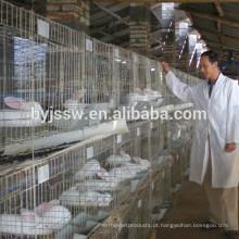 Cultivo comercial de coelhos nas fazendas de Kenya para entrega