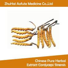 Extracto herbario chino puro Cordyceps Sinensis