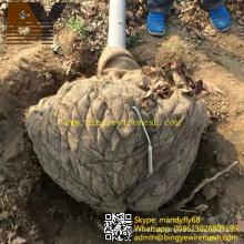Remova a rede da bola de raiz da árvore da rede de arame das árvores