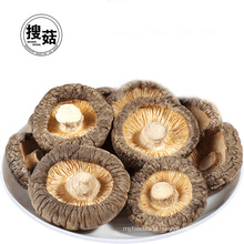 Good price high quality dried mushroom export