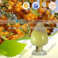 Sea Buckthorn Extract Seabuckthorn Berry Oil
