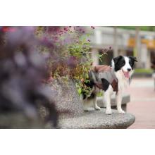 Resistente al agua de las mascotas ropa para perros