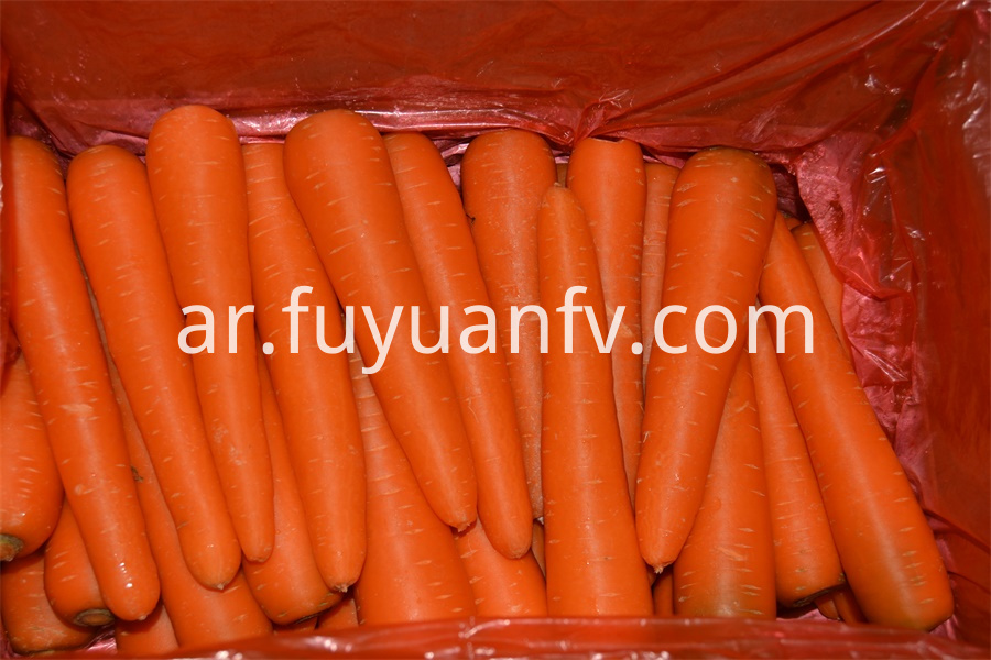 fresh long carrot