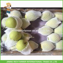 High Quality Fresh Shandong Pear