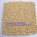 Health Food New Crop Blanched Peanut Kernel