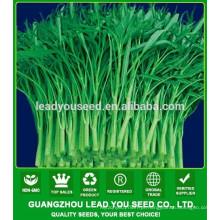 Sementes do espinafre da água do verde da haste do verde de MWS03 Qigeng fornecedor