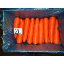 Jus de carotte très frais